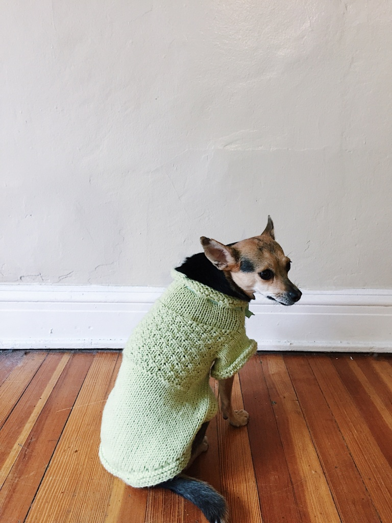 Knitting a Tiny Dog Sweater - Sophie Hines - DIY - Blog - Knit Project